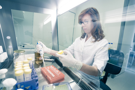 Female life scientist researching in laboratory, pipetting cell culture medium samples in laminar flow. Photo taken from laminar interior. Banque d'images