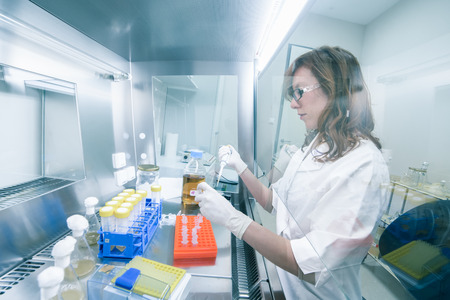 lab coats: Female life scientist researching in laboratory, pipetting cell culture medium samples in laminar flow. Photo taken from laminar interior. Stock Photo