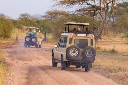 africa tree: Open roof 4x4 vehicles in african wildlife safari. Stock Photo