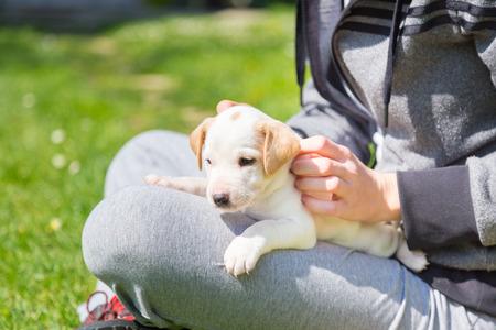 amigos abrazandose: De raza mixta lindo adorable cachorrito de mascotas en una vuelta del dueño de una mujer, al aire libre en un prado en un día soleado de primavera. Foto de archivo