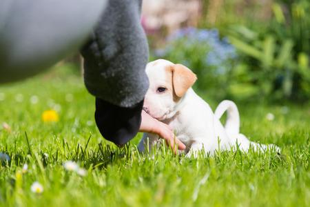 amigos abrazandose: De raza mixta adorable perrito lindo que juega con el due�o de una hembra, al aire libre en un prado en un d�a soleado de primavera. Foto de archivo