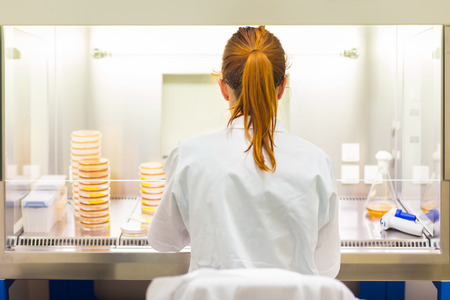 laboratory: Female scientist researching in laboratory, pipetting cell culture medium samples in laminar flow. Life science professional grafting bacteria in the pettri dishes.