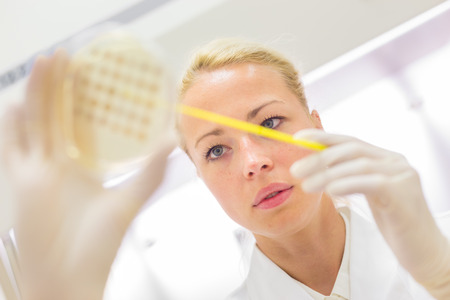 lb: Female life science professional observing cell culture samples on LB agar medium in petri dish.  Scientist grafting bacteria in microbiological analytical laboratory .  Focus on scientists eye. Stock Photo