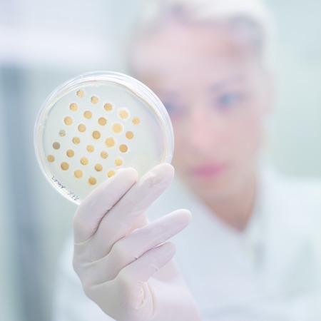 lab coat: Ciencias de la vida profesional de observación muestras de cultivo celular en medio de agar LB en placa de Petri. Científico injerto bacterias en laboratorio de análisis microbiológico. Concéntrese en agar placa de vidrio comedero.