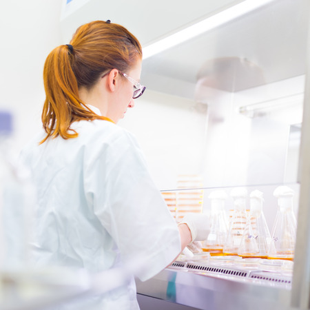 scientist: Female scientist researching in laboratory, pipetting cell culture samples on LB agar medium in laminar flow. Life science professional grafting bacteria in Erlenmeyer flask. Stock Photo