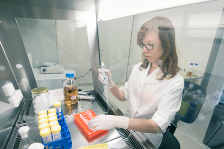 health care research: Female scientist researching in laboratory, pipetting cell culture medium samples in laminar flow. Life science professional grafting bacteria in the pettri dishes. Photo taken from laminar interior.