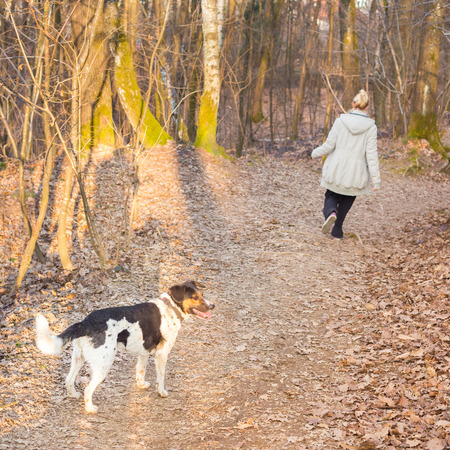 bred: Lady exercising walking her mixed bred dog in the fall woods. Square composition. Stock Photo