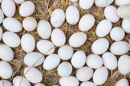 white eggs: White eggs on a hay beeing sold at a local farm market.