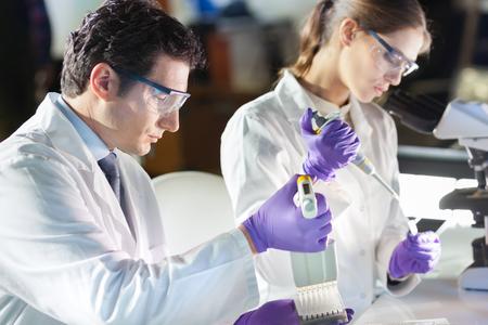 cientificos: Cient�fico vida investigando en el laboratorio. Profesionales de ciencias de la vida se centraron pipeteado soluci�n mezcla maestra en el pozo micro placa de PCR 96 usando m�ltiples pipeta canal. Salud y biotecnolog�a. Foto de archivo