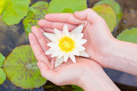 handcare: Woman hands holding lotus flower against leaves background. Stock Photo