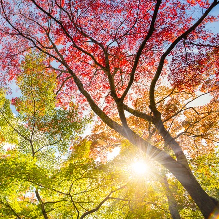 fallen tree: The warm autumn sun shining through colorful treetops, with beautiful bright blue sky. Square composition.