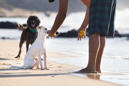 fetch: Dogs on beach in summer, playing ball with his owner.
