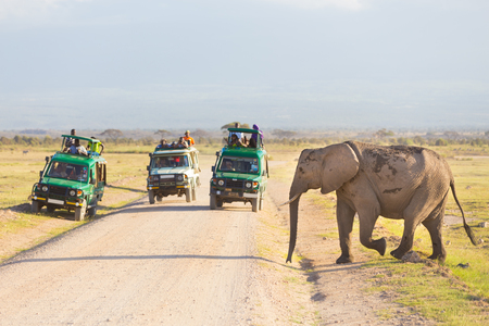 Tourists in safari jeeps watching and taking photos of big wild elephant crossing dirt roadi in Amboseli national park, Kenya. 写真素材