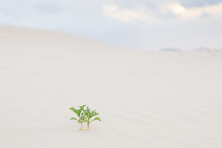 green life: Two new green plant sprouts in desert sands. New life concept.