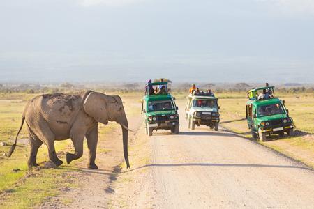 Tourists in safari jeeps watching and taking photos of big wild elephant crossing dirt roadi in Amboseli national park, Kenya. Panorama.