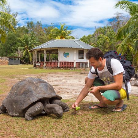Male tourist feeding and admiring big old Aldabra giant tortoises, Aldabrachelys gigantea, in National Marine Park on Curieuse island, close to Praslin on Seychelles.