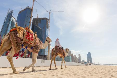 guia de turismo: La guía turística que ofrece paseo en camello turística en la playa de Jumeirah en Dubai, Emiratos Árabes Unidos. Lujosos rascacielos de Dubai Marina en el fondo. Foto de archivo
