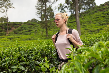 agriculture sri lanka: Active caucasian blonde woman enjoing fresh air and pristine nature while tracking among tea plantaitons near Ella, Sri Lanka. Bacpecking outdoors tourist adventure.