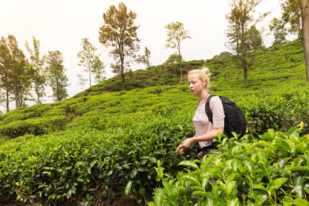 ella: Active caucasian blonde woman enjoing fresh air and pristine nature while tracking among tea plantaitons near Ella, Sri Lanka. Bacpecking outdoors tourist adventure.