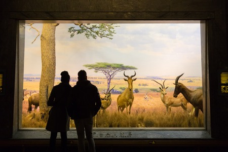 recreate: New York, United States of America - March 25: The American Museum of Natural History on March 25, 2015. With collections containing 32 million specimens, it is one of largest museums in world.