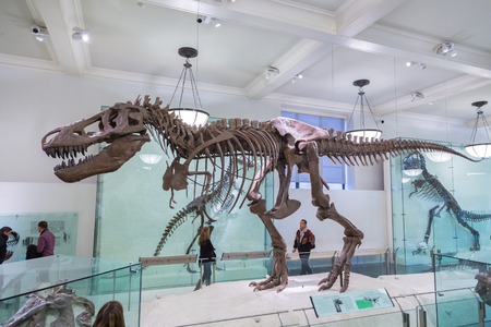 New York, United States of America - March 25: American Museum of Natural History holds large collection of prehistoric exhibits from all world. T-rex dinosaur skeleton exhibit on March 25, 2015. Imagens - 70596409