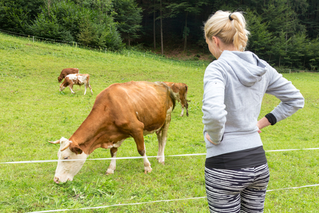 Active female hiker wearing sporty clothes observing and caressing pasturing cows on mountain meadow, Gorenjska region, Alps, Slovenia. Banco de Imagens - 80105399