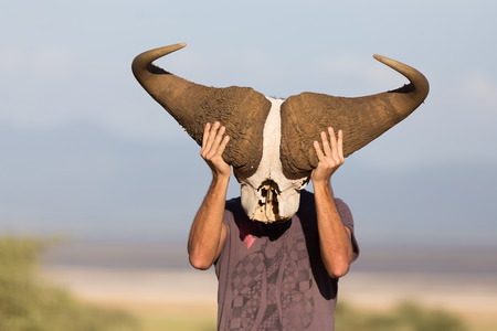 Man holding big african buffalo skull wearing it like a mask in nature on african wildlife safari, Amboseli national park, Kenya.