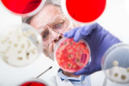 Focused senior life science professional grafting bacteria in the pettri dishes. Lens focus on researchers pace. Through the glass view.