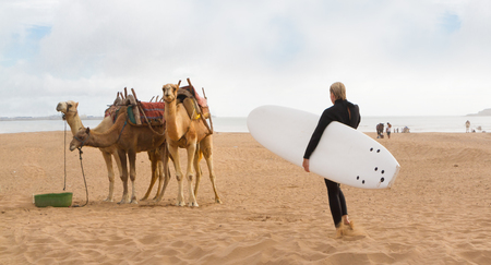 Female surfer holding surfboard and camels at the beach of Essaouira, Morocco, Africa.