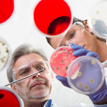 Scientists researching in laboratory, pipetting cell culture samples and serum on LB agar medium. Life science professional grafting bacteria in the petri dishes. Through the glass view. Stock Photo