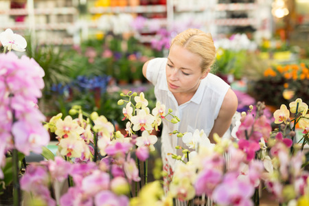 Beautiful female customer smelling colorful blooming orchids in retailers greenhouse. Stock Photo