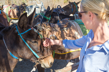 womans hand caressing donkeys in a place in Spain Banco de Imagens