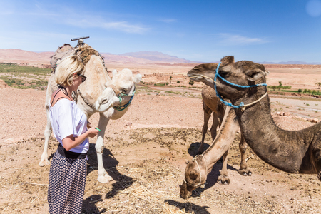 Young woman caressing camels on vacation in Morocco.