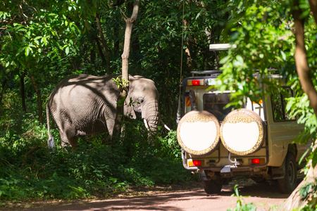Wild african elephant beeing observed by tourist from open roof jeep on wildlife safari. Tanzania, Africa. Stok Fotoğraf