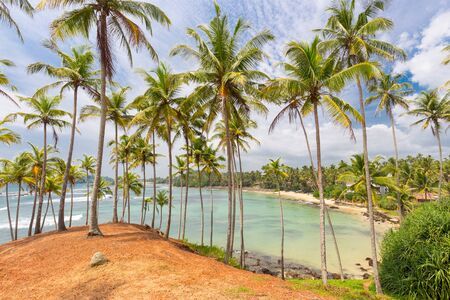 Tropical beach with exotic palm trees and wooden boats on the sand in Mirissa, Sri Lanka.