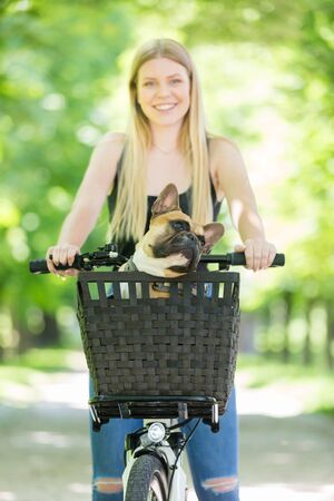 French bulldog dog enjoying riding in bicycle basket in city park. 版權商用圖片 - 150478476