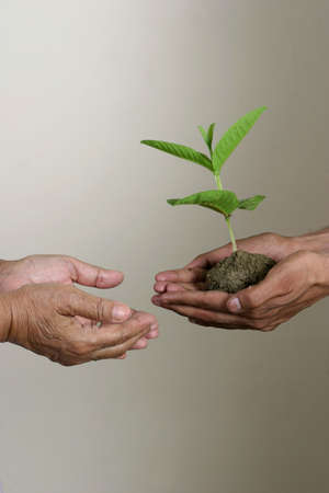 abound: hands taking care of plants, concept for environment