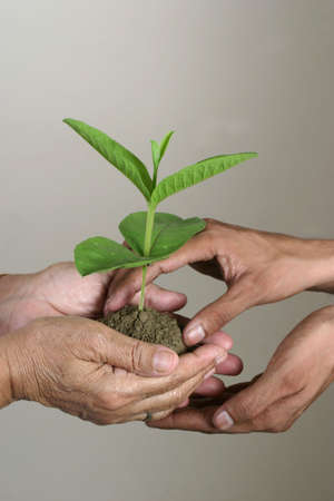 define: evnironment theme, handing over plant in young hands