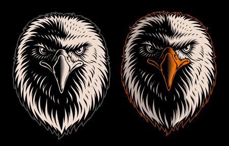Vector illustration with head of eagle on the dark background Vecteurs
