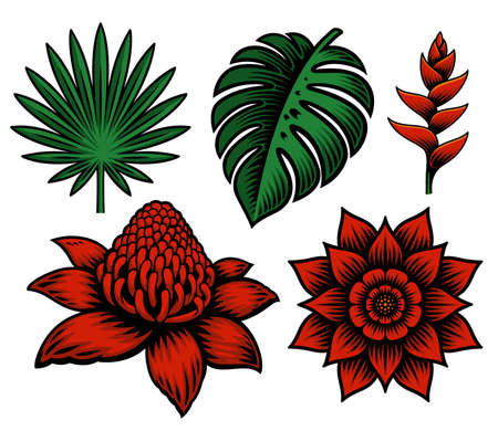 A set of vector illustration of tropical flowers and plants isolated on white background