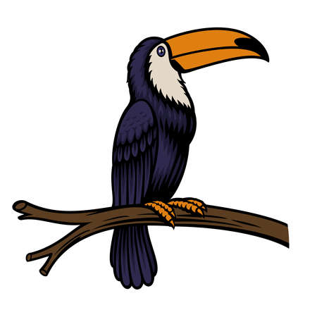 A vector illustration of a toucan parrot isolated on white background Stock Illustratie