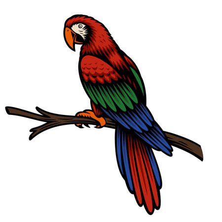 A colorful vector illustration of a parrot Ara isolated on white background.