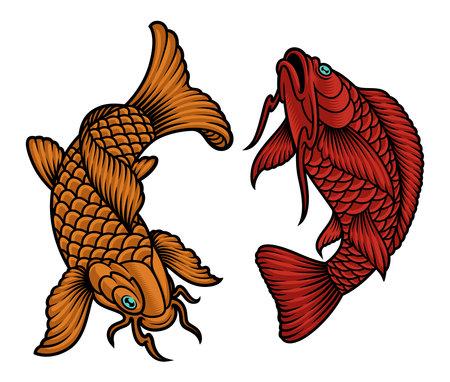 A vector illustration of Japanese koi fish on white background