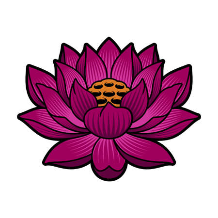 A vector illustration of a lotus isolated on white background
