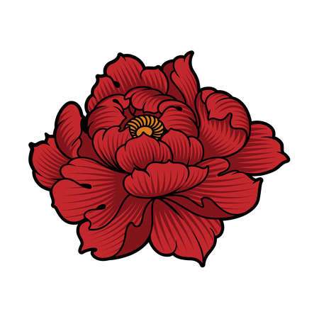 a vector illustration of peony flower isolated on white background