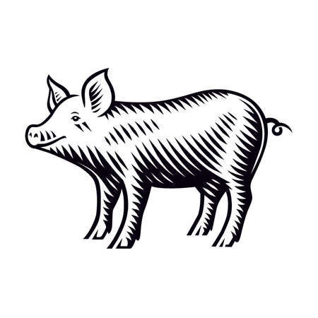 A black and white vector illustration of a piglet in engraving style