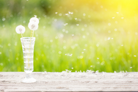 white dandelion in a vase on a wooden table, outdoors
