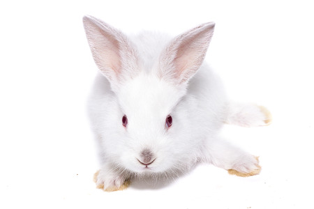 little white rabbit with red eyes, isolate, easter bunny Reklamní fotografie
