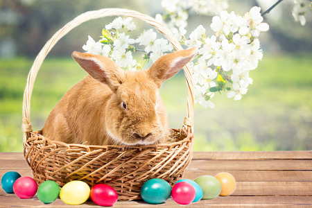 easter bunny with eggs in a basket, easter background Stock Photo