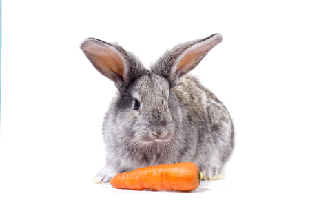 grey rabbit isolate with carrots, decorative rabbit Reklamní fotografie